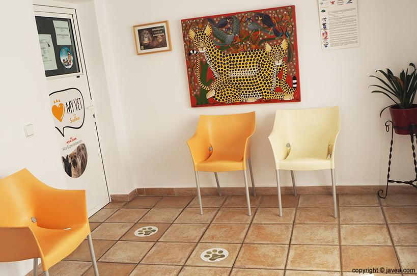 Sala d'espera Clínica-veterinària-assis-vets