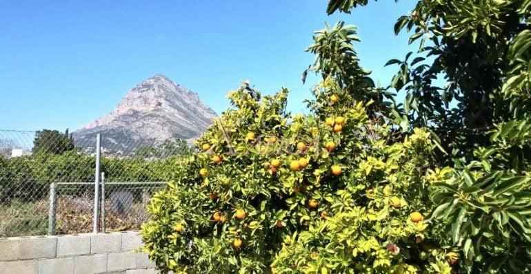 Árboles frutales casa campo Xabiga Inmobiliaria