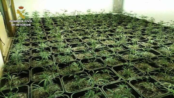 Выращивание марихуаны в закрытых помещениях как узнать что человек курит марихуану