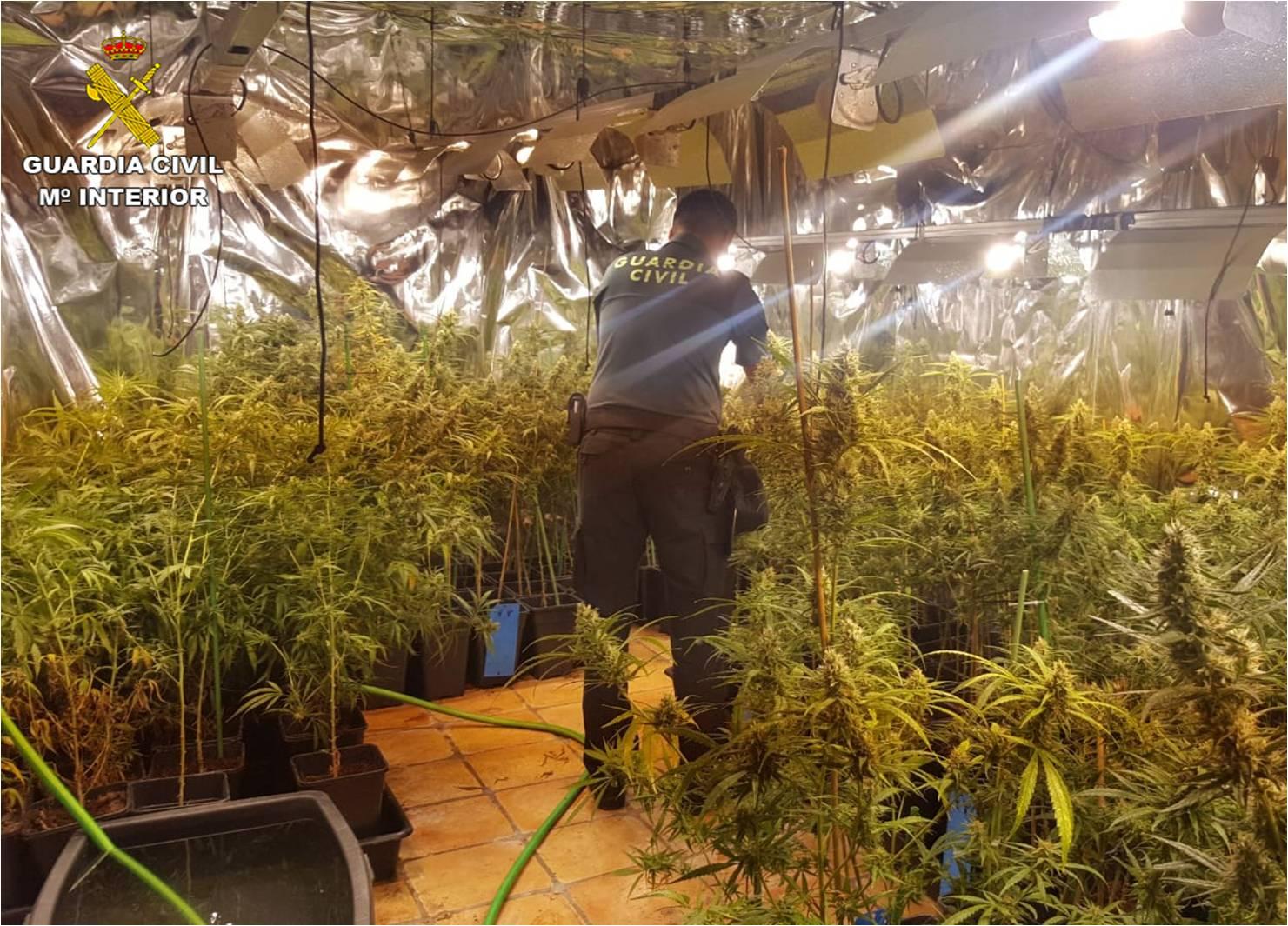 Люди выращивали марихуану купить в питере коноплю