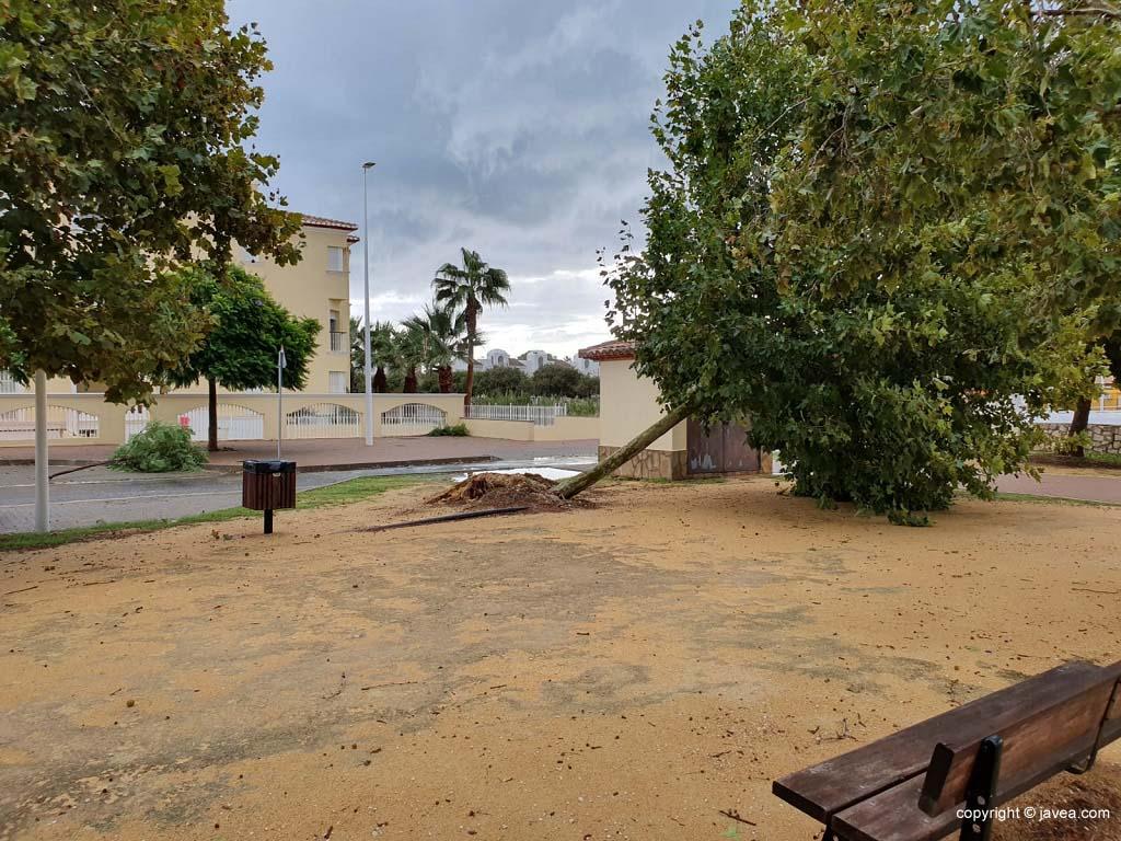Árvore caída na Via Augusta