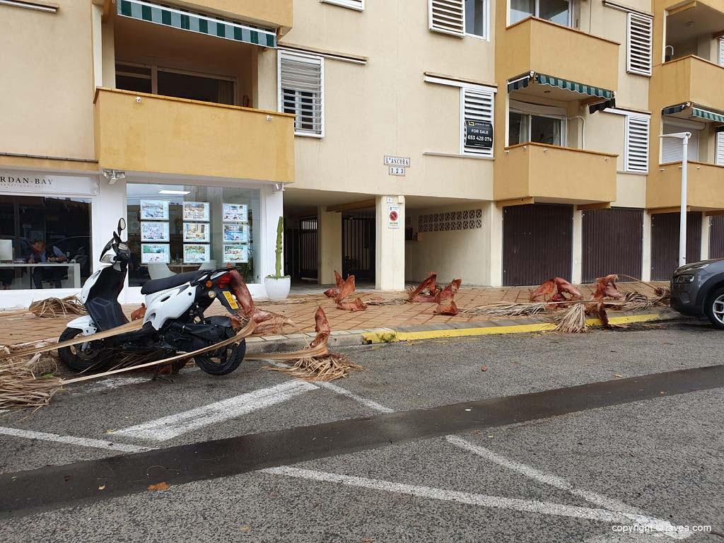 Ramos caídos na área de Arenal
