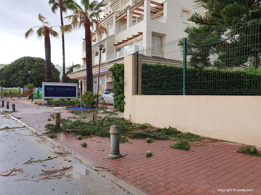 Galhos de árvores arrancados pelo vento forte