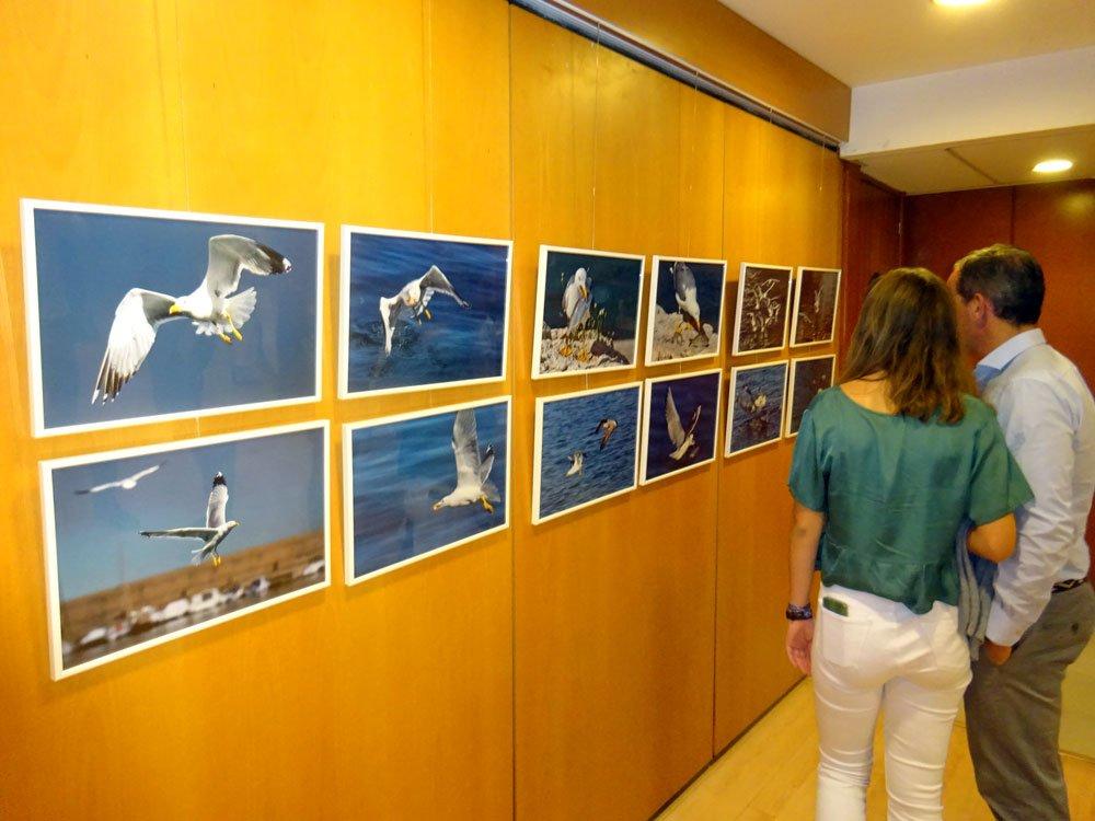 Exposició de Fili Navarrete a favor del Club Rotary per a la lluita contra la pòlio