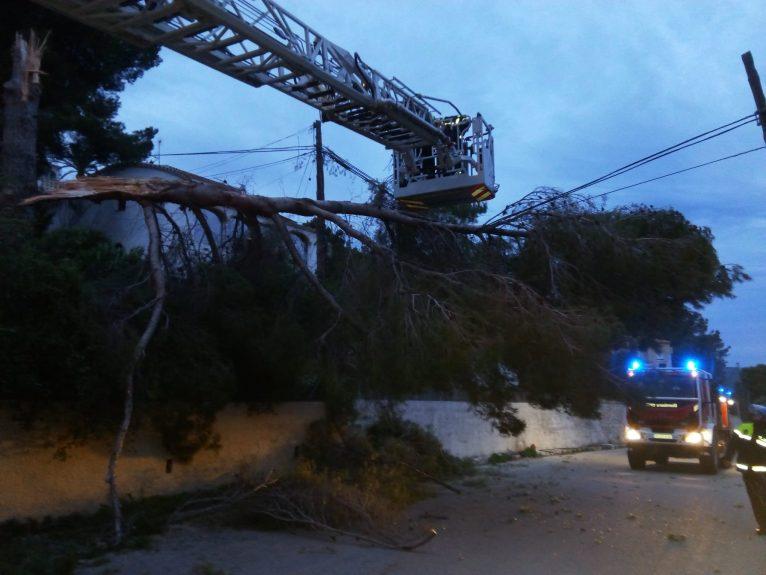 Árbol caído por el fuerte viento en Pinosol