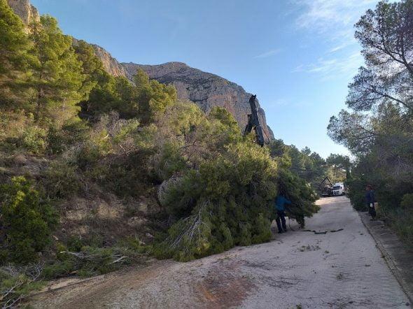 Imatge: Tallafocs a la zona de Toscamar-Montgó