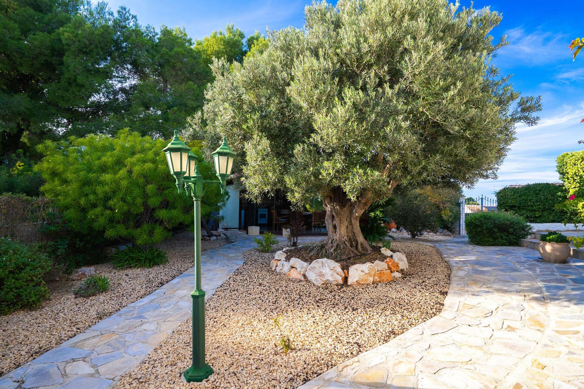 Jardín con árboles y gravilla en un chalet de vacaciones en Jávea – Aguila Rent a Villa
