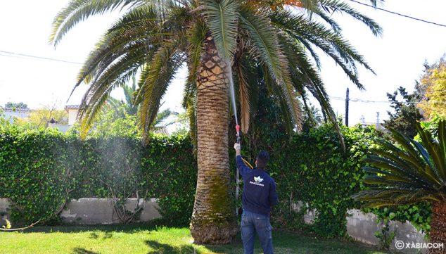 Imagen: Cuidado de palmeras y de jardines en general - ServiGardens