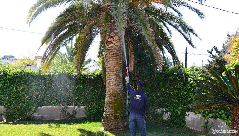 Cuidado de palmeras y de jardines en general - ServiGardens
