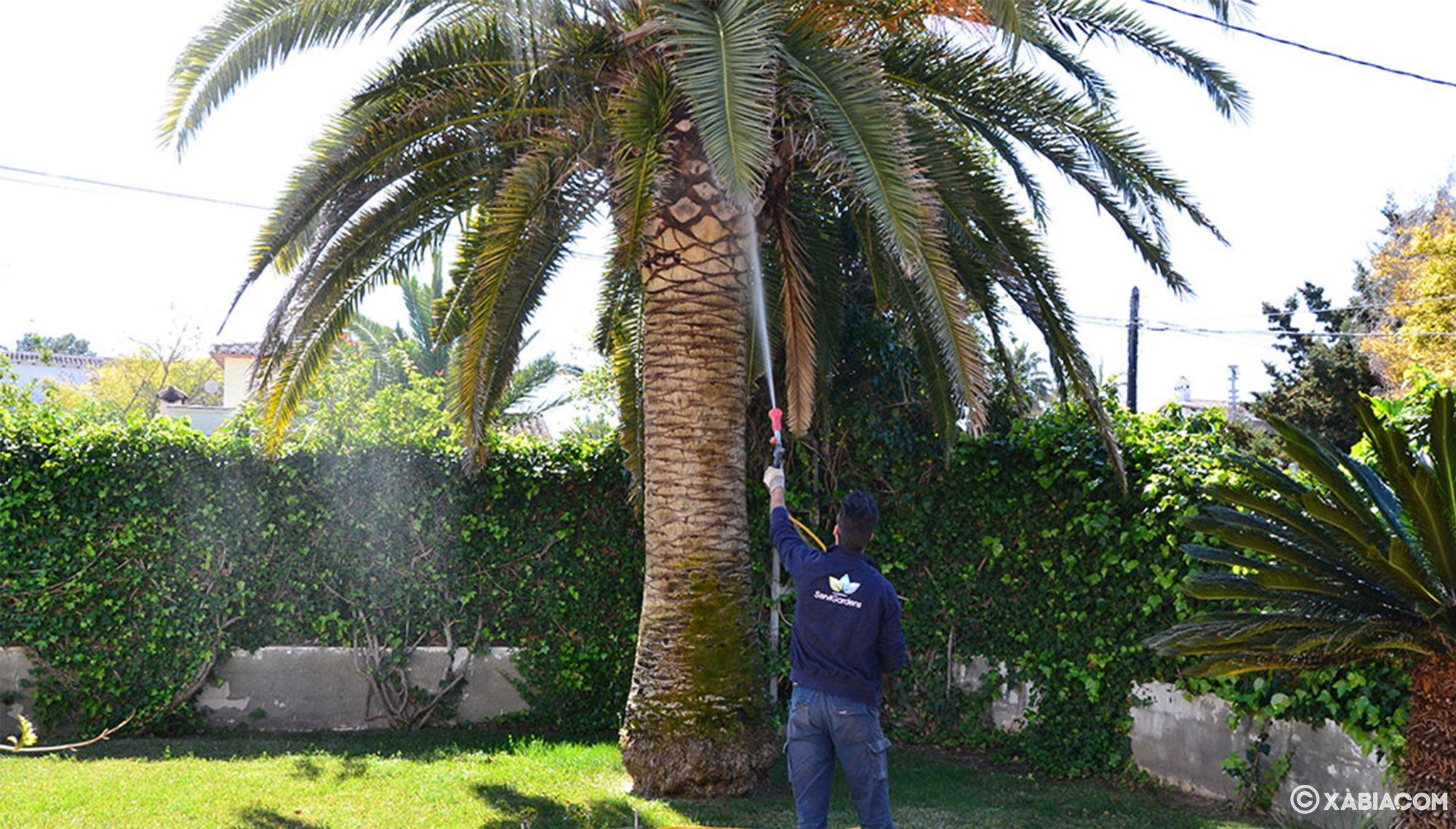 Cuidado de palmeras y de jardines en general – ServiGardens