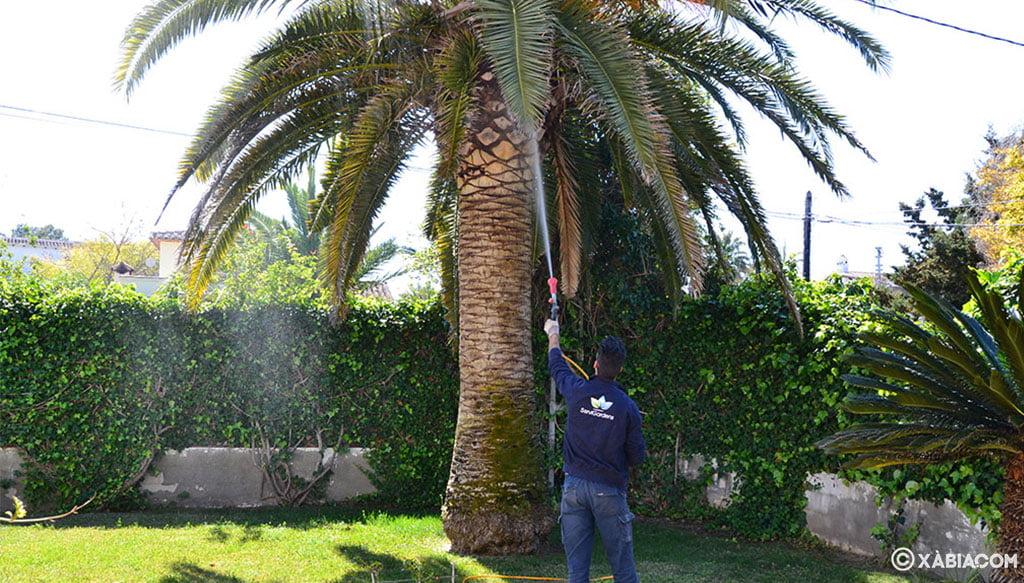 Cuidado de palmeras y jardines en general en Jávea – ServiGardens