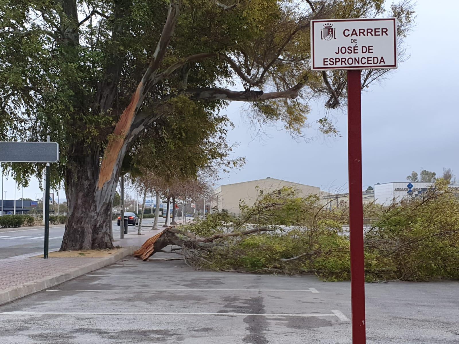 Un árbol en la Avenida del Plà cae por el fuerte viento