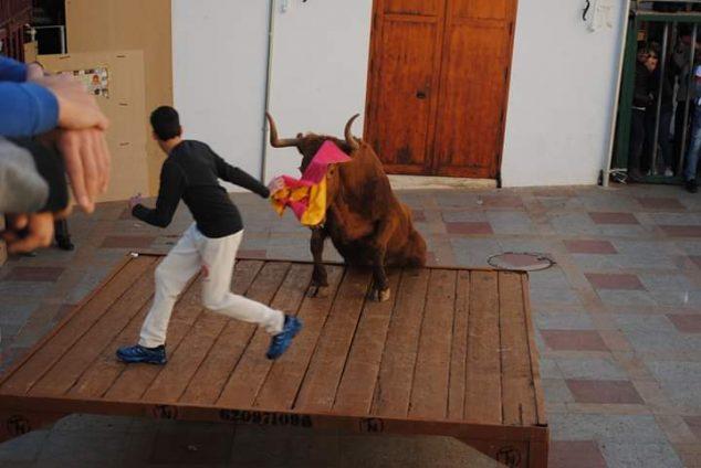 Imatge: La vaca puja a l'empostissat a les festes de Sant Sebastià 2020