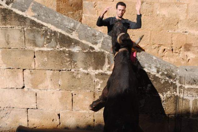Imagen: Momento de toreo en una actuación taurina de las fiestas de Sant Sebastià de Xàbia