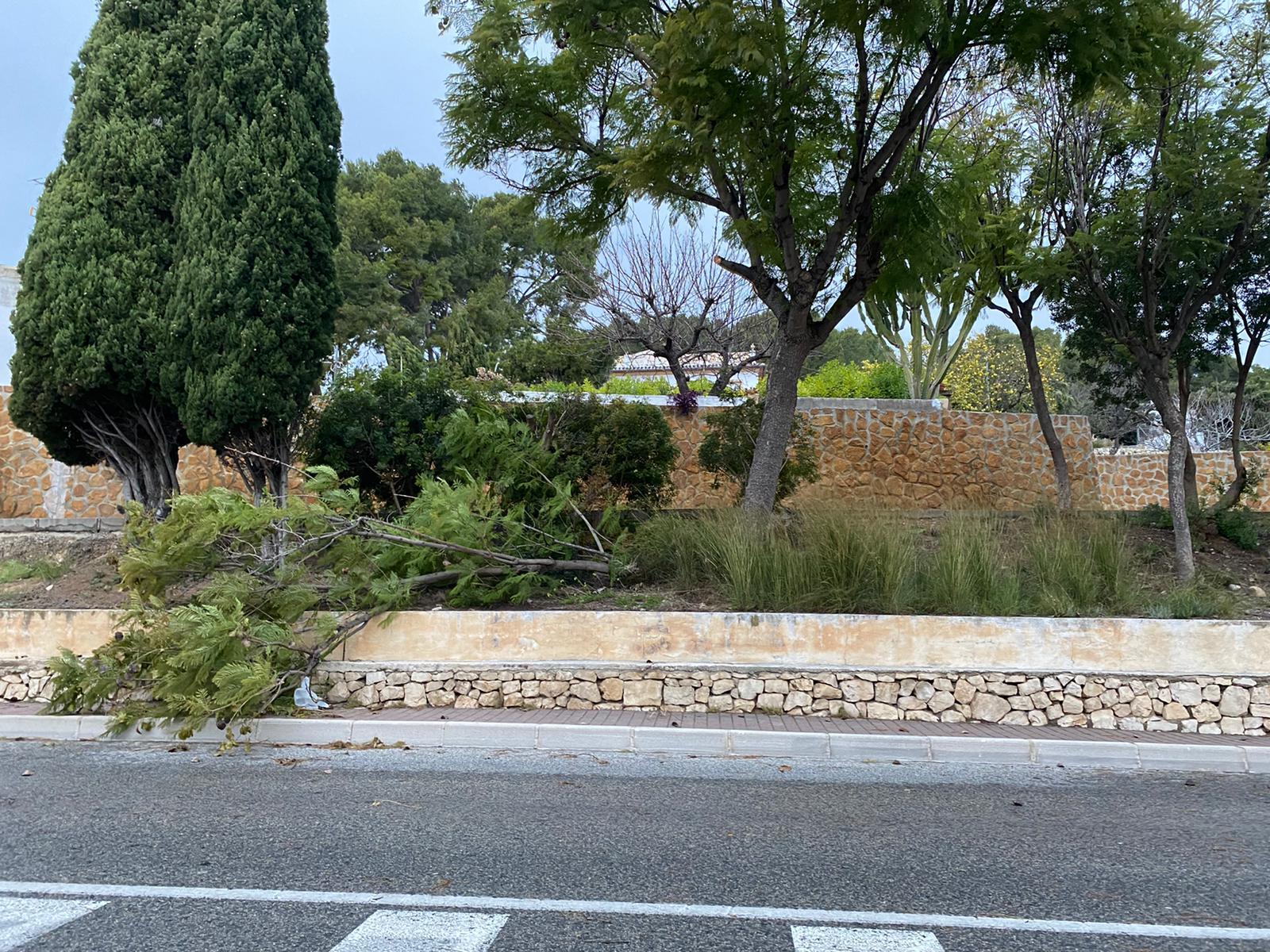 Ramas de árboles rotas por el fuerte viento