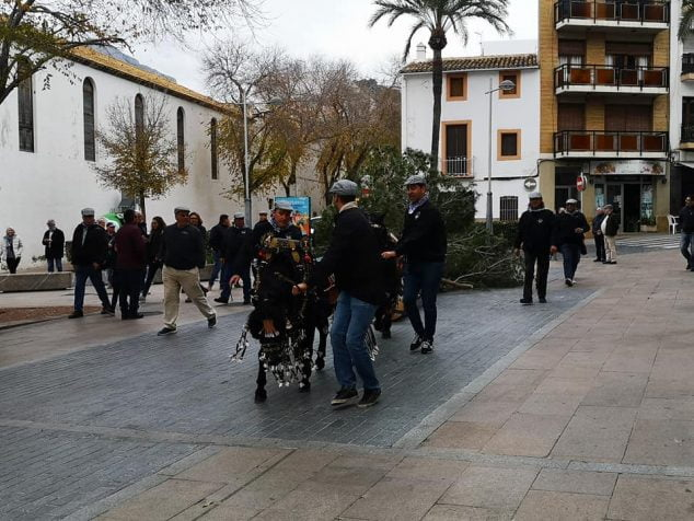 Image: Transfer of the pine of Sant Antoni