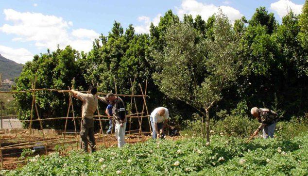 Agricultores trabajando en Dénia