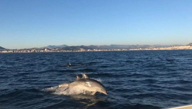 Imagen: Avistamiento de delfines en Xàbia