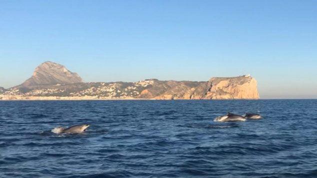 Imagen: Delfines en la bahía de Xàbia
