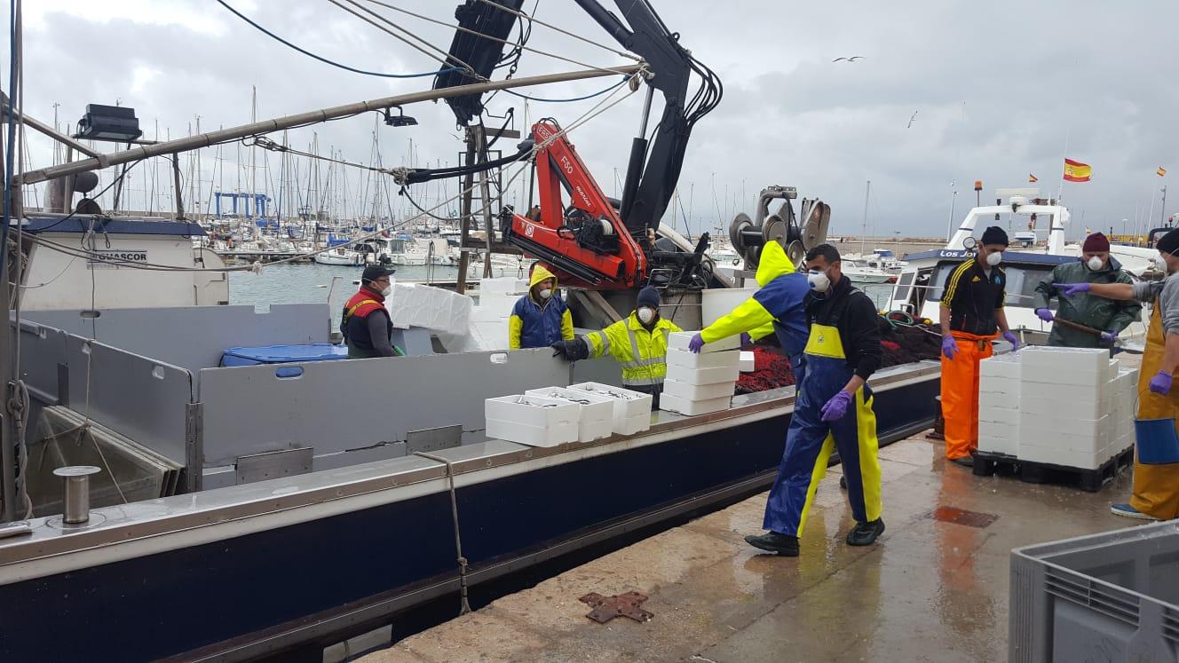 Momento de la descarga de la pesca del día en Vinarós