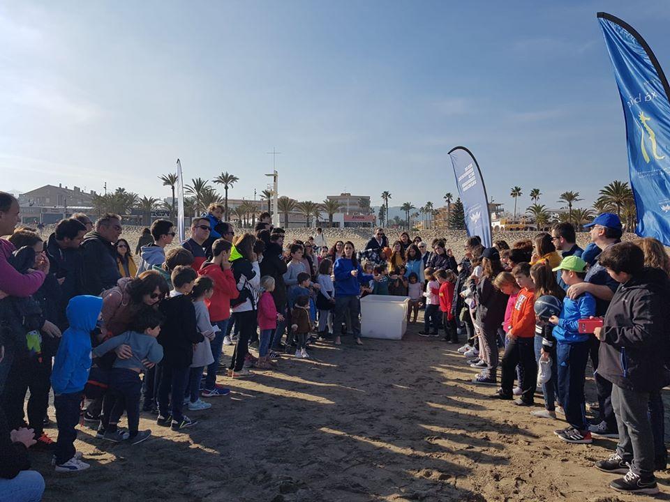 Suelta de la tortuga en la playa del Arenal
