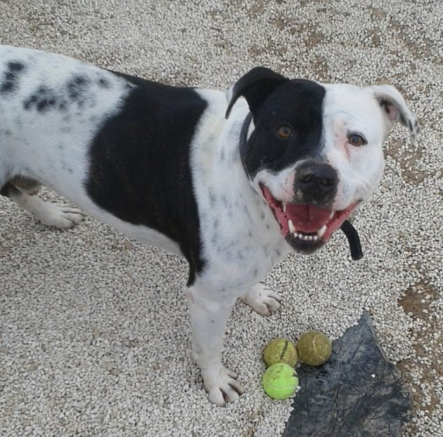 Imagen: Tayson en el perrera de Jávea