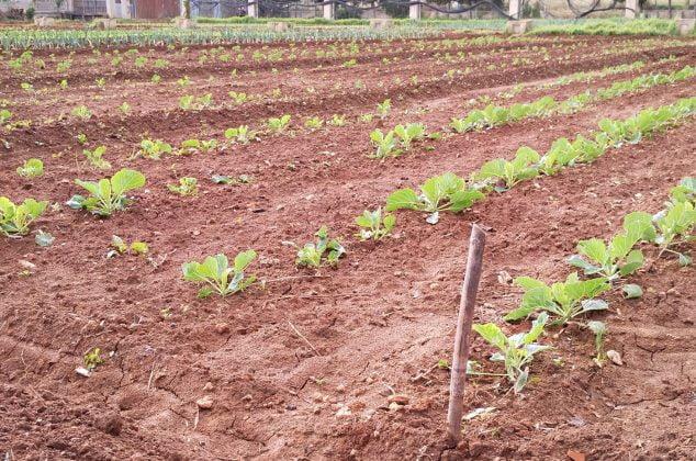 Imagen: Campo agrícola de la Marina Alta