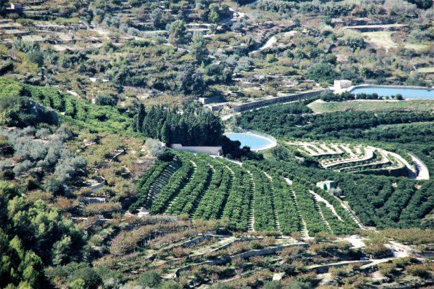 Imagen: Campos de la comarca de la Marina Alta