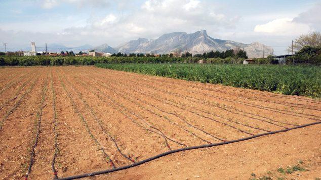 Imagen: Un campo agrícola de la Marina Alta