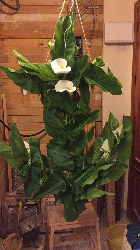 Cruz de flores en la calle Andres Lambert