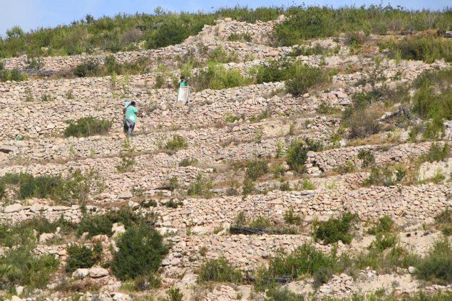 Imagen: Reforestación de la Granadella