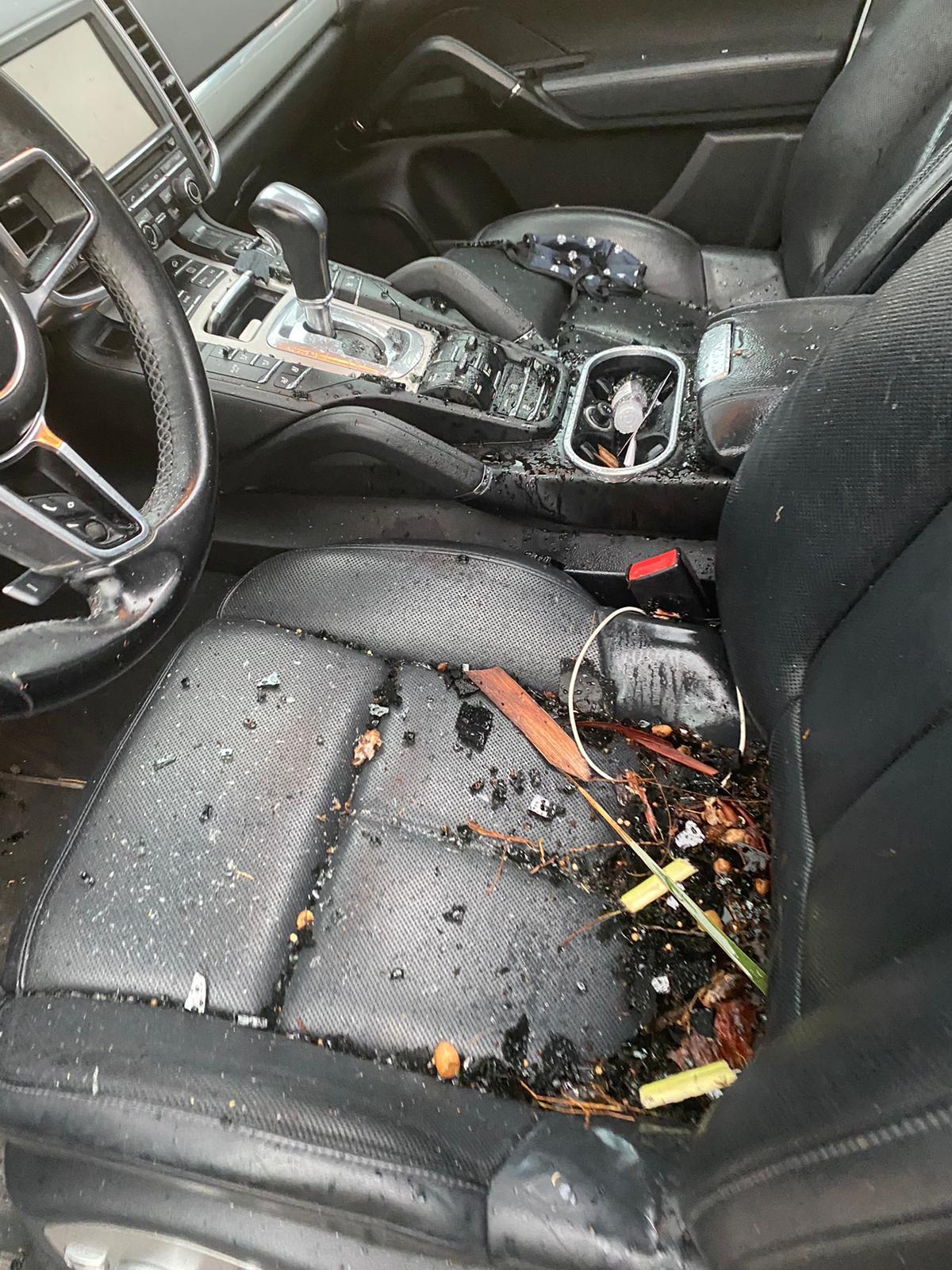 Interior del vehículo dañado por la caída de la palmera