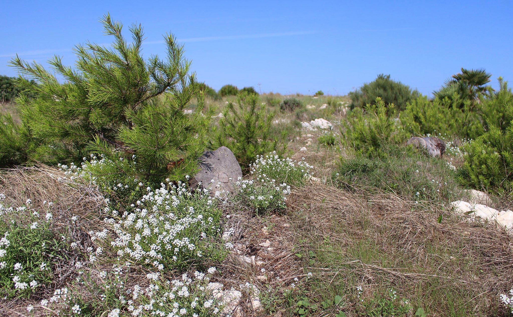 Flora del Cabo de San Antonio de Jávea