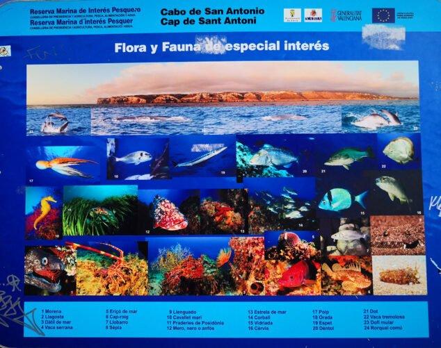Imagen: Panel sobre la flora y la fauna del Cabo de San Antonio de Jávea