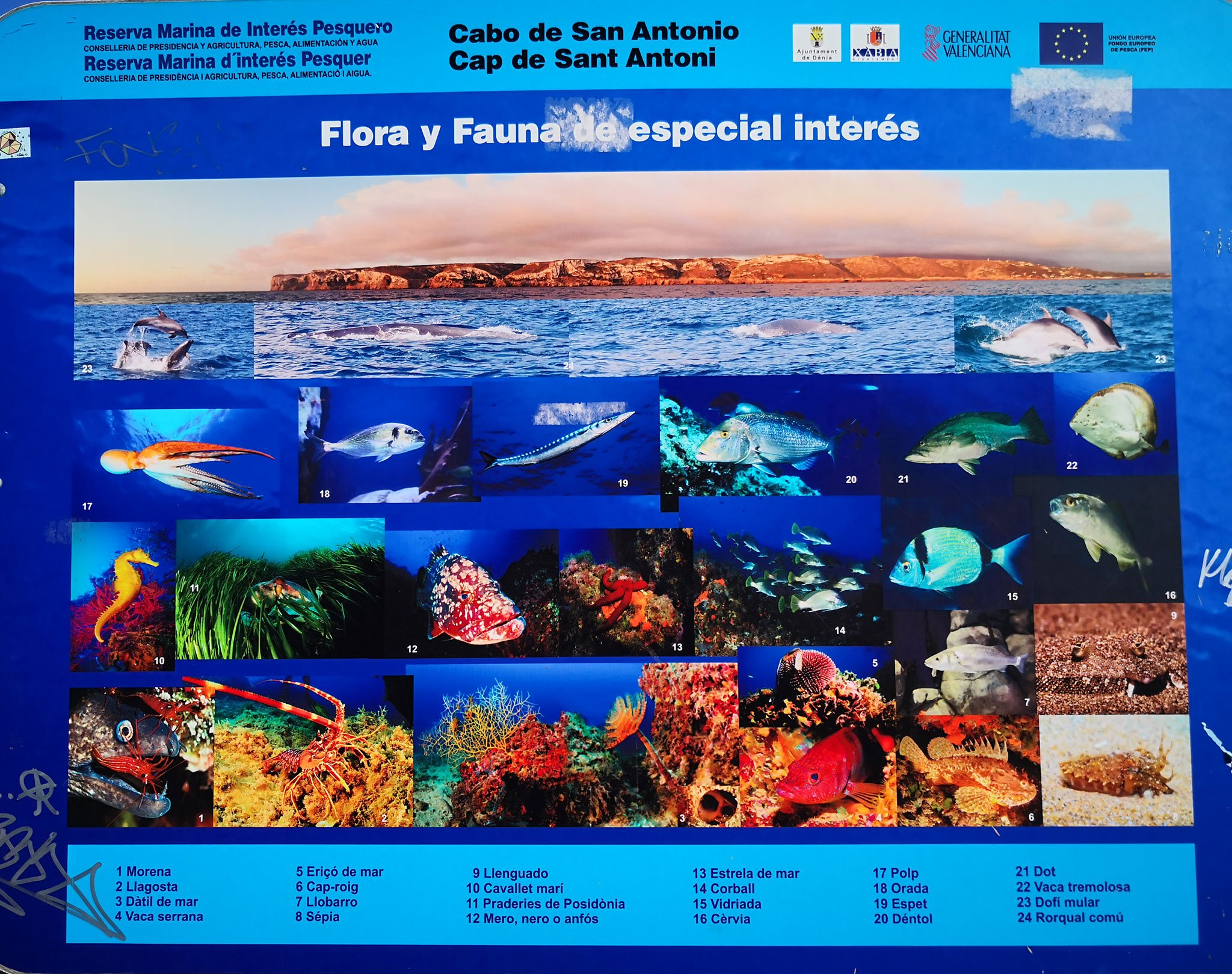 Panel sobre la flora y la fauna del Cabo de San Antonio de Jávea
