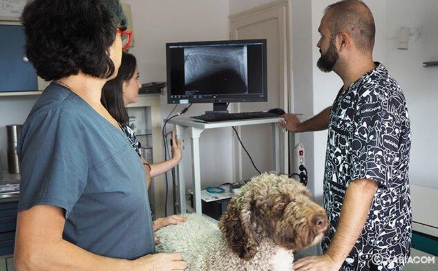 Imagen: Equipo de Clínica Veterinaria Asis Vets