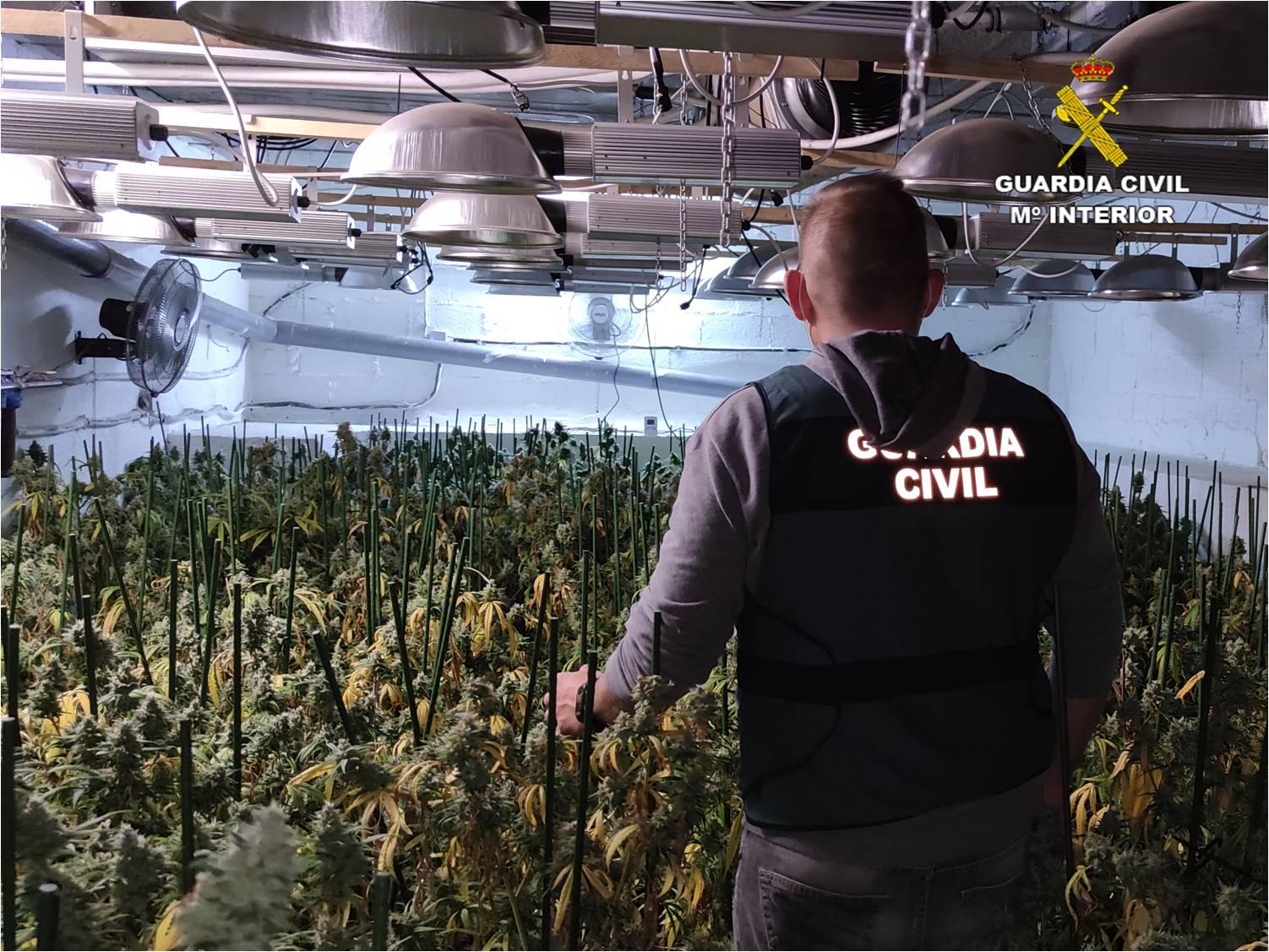 Desmantelan plantación marihuana