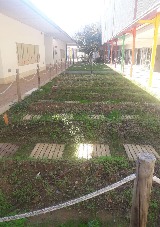 Huerto escolar del Colegio L'Arenal de Xàbia