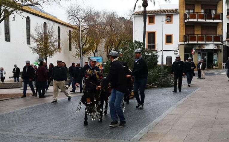 Traslado del pino de Sant Antoni en Jávea