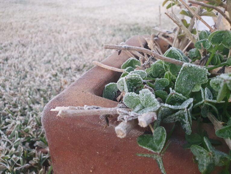 Los termómetros han registrado -2 grados en algunas zonas de Xàbia