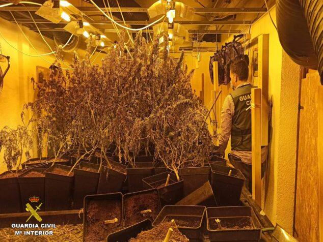 Imagen: Los agentes incautaron más de mil plantas