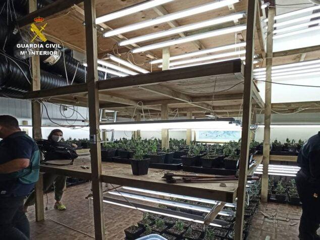 Imagen: Desmantelan una plantación indoor de marihuana en Xàbia
