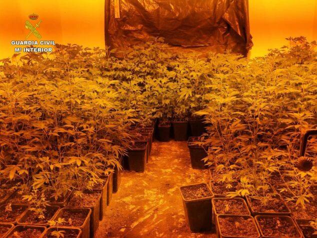 Imagen: Plantación indoor de marihuana