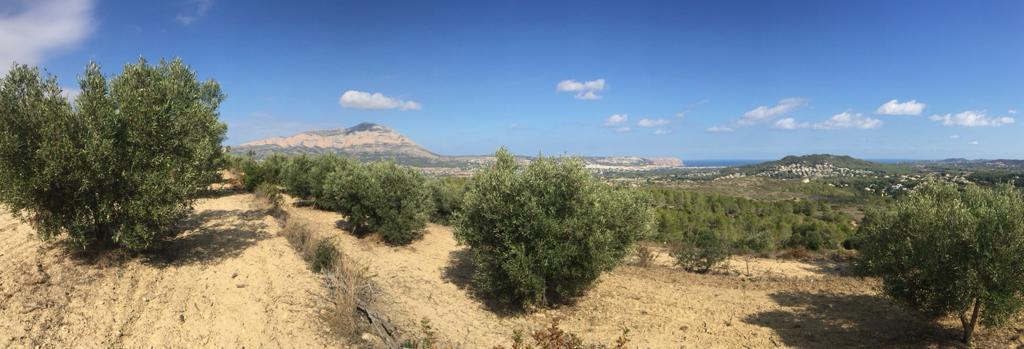 Finca de olivos 'Allarriba' en Xàbia