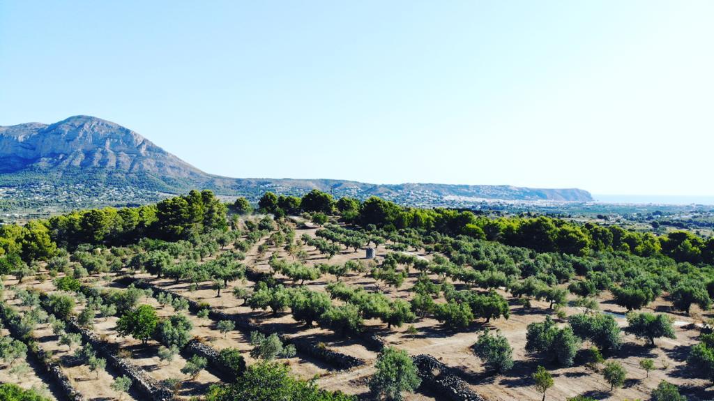 Finca olivos