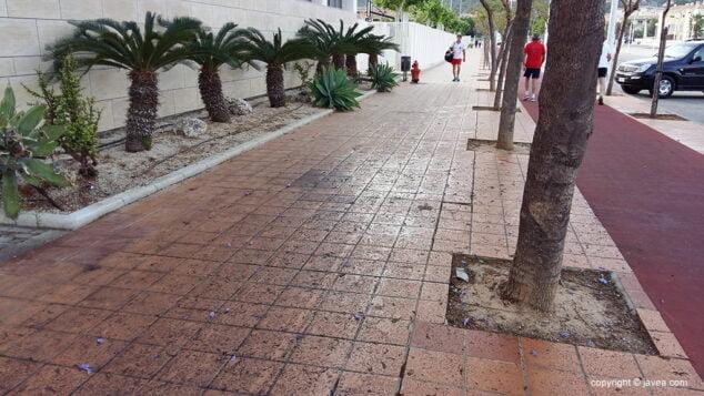 Imagen: Residuos de las flores de las jacarandas en la vía augusta