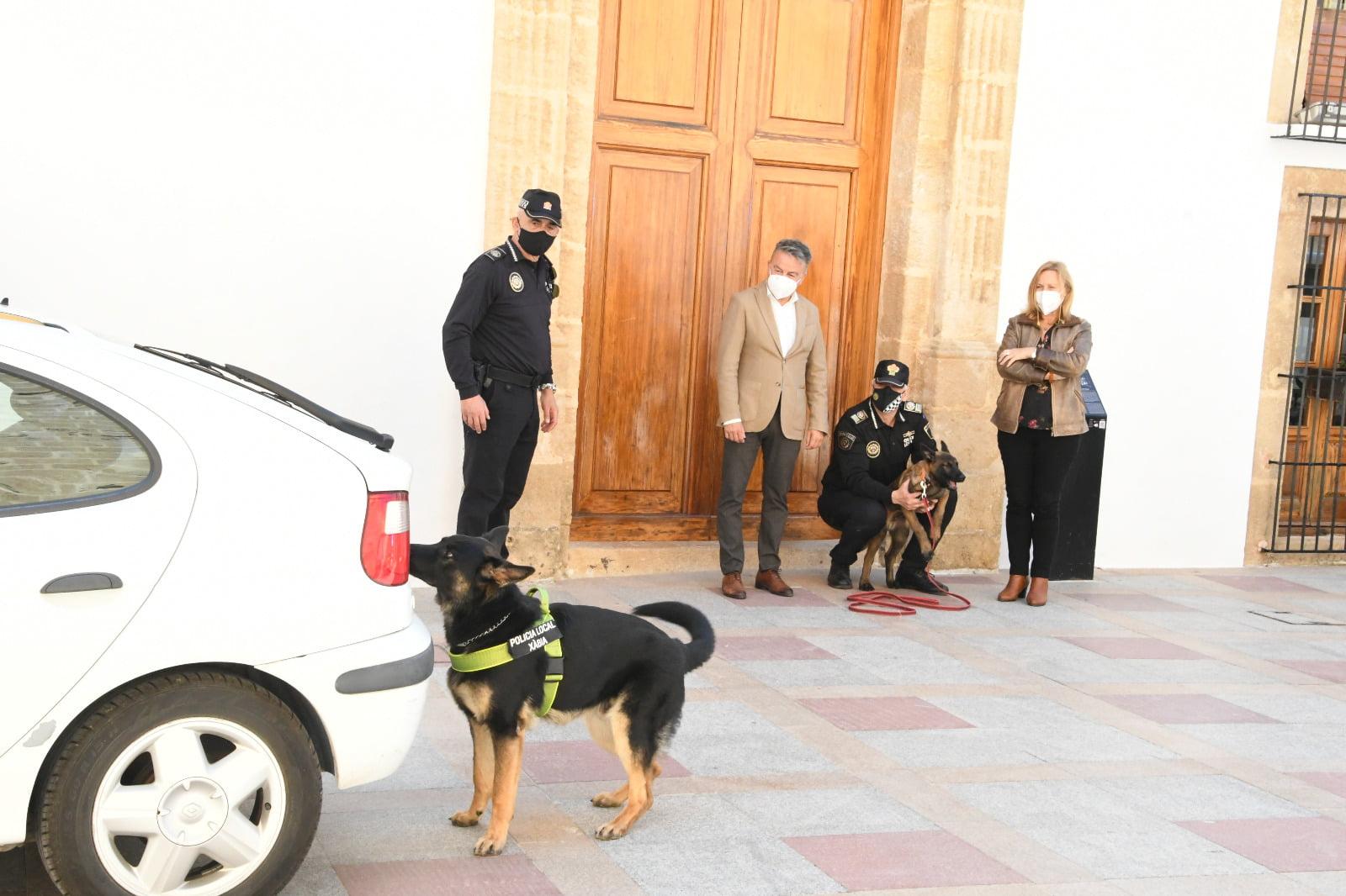 Demostración de la búsqueda de la Unidad canina de Xàbia